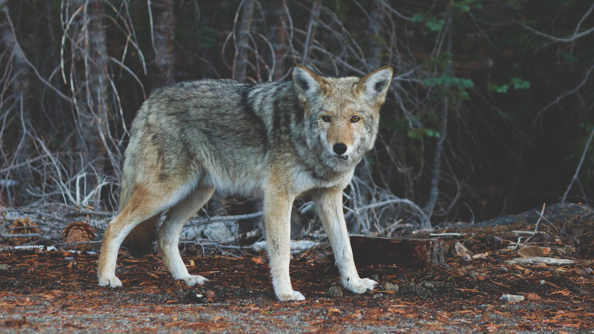 the relevance of wild animal suffering effective altruism foundation